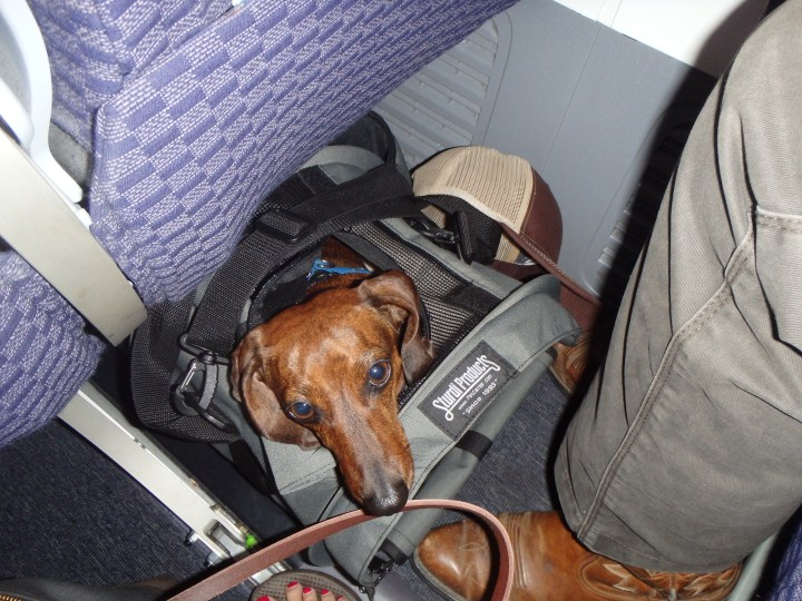 Truman under the seat - mostly - on our first flight