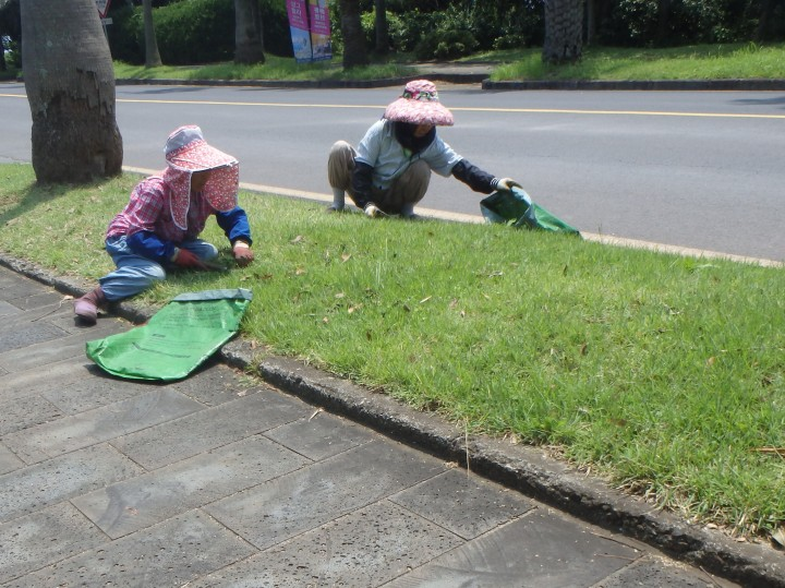 Okay, these ladies were literally cutting the grass with small scythes...