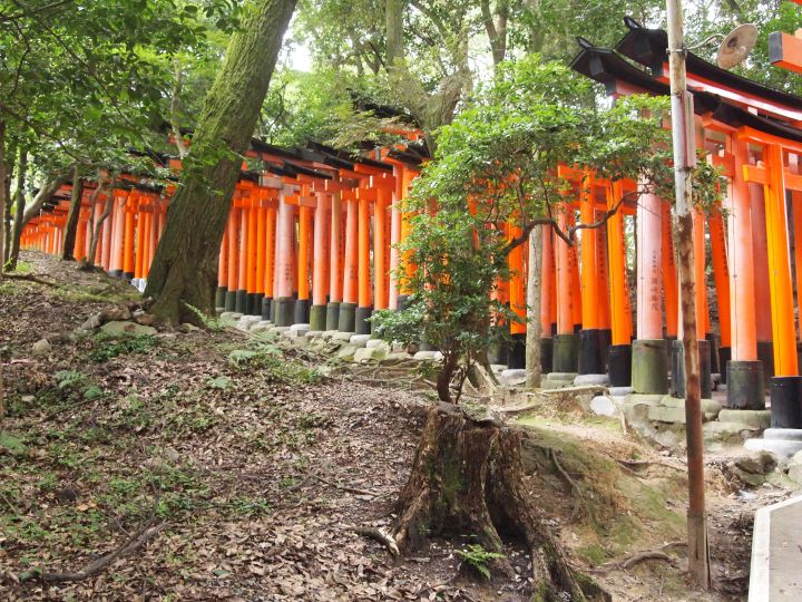Torii gate pathway