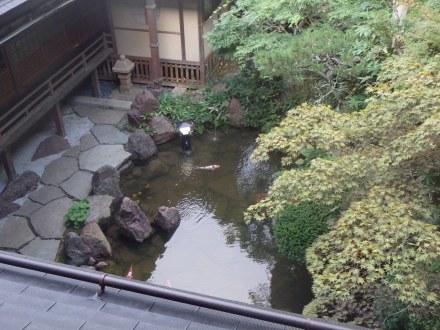 The koi pond below us