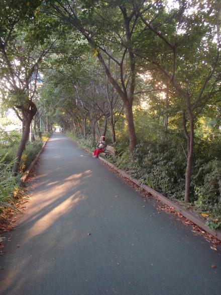 A nice tree-lined path