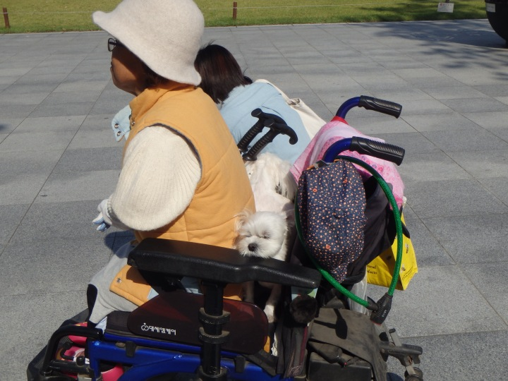 A fellow observer - she had TWO dogs in the back of her wheelchair!