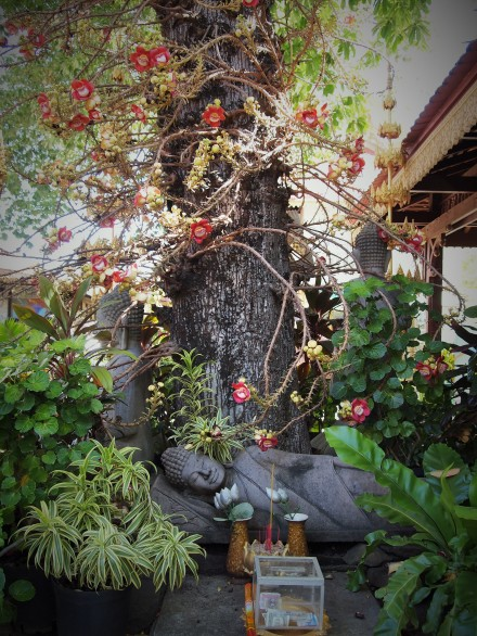 Gorgeous buddha under a shorea robusta or śāl tree