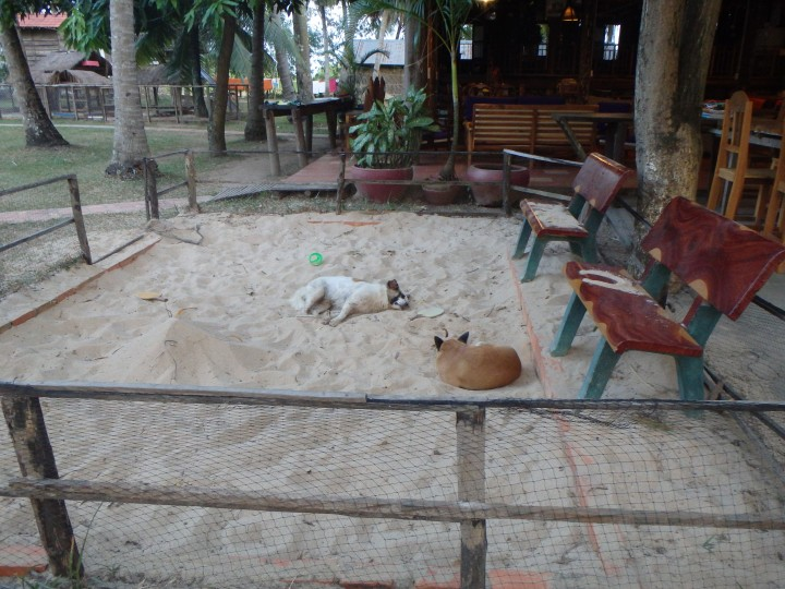 some of the property dogs taking a nap in the sand pit