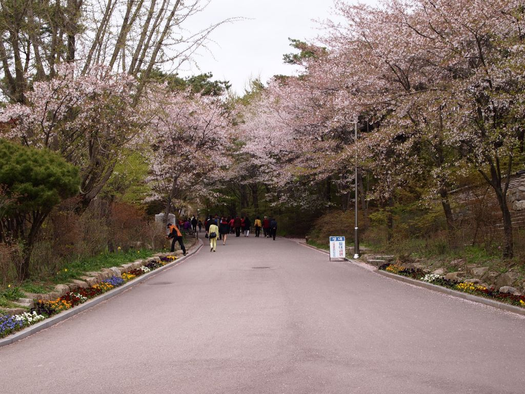 I was surprised that the cherry blossoms hadn't fallen here