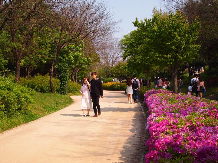 Wide walking/biking paths