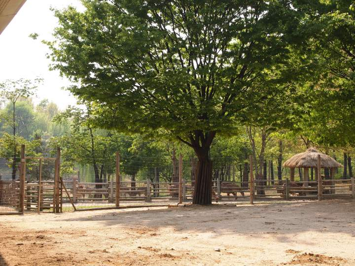 The deer enclosure