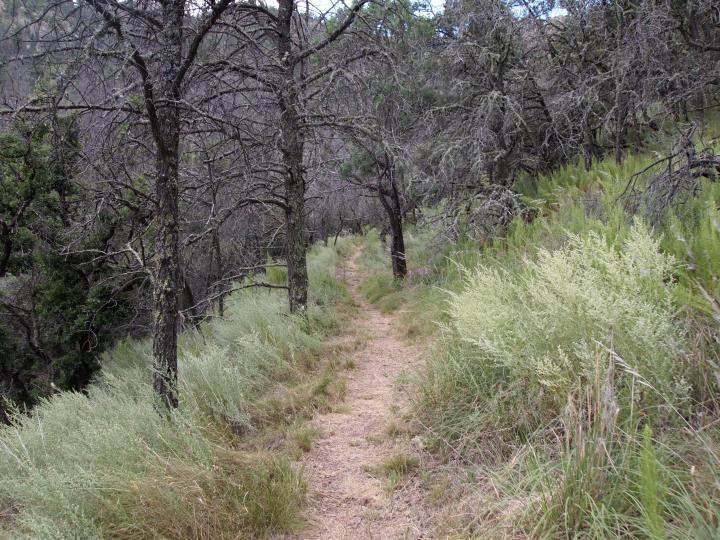 Entering a more lush portion of the trail