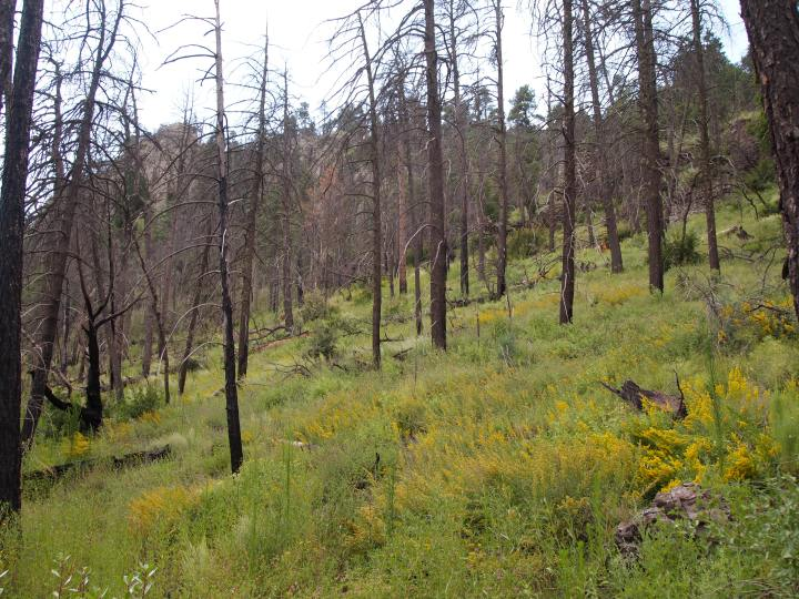 Past forest fires were still evident