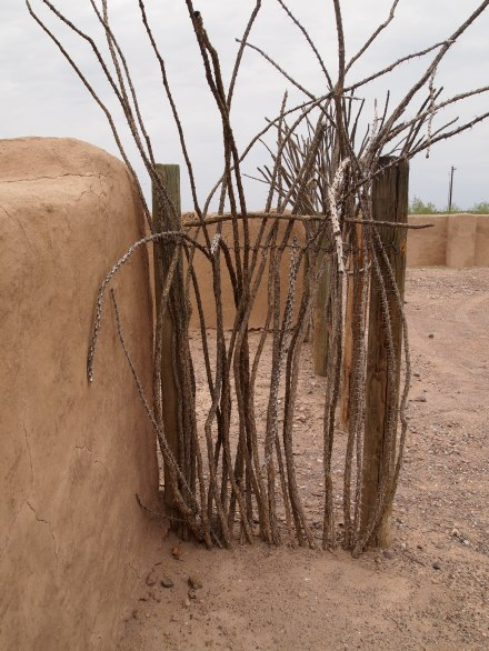 Dried ocotillo put to use