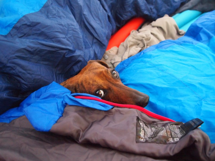Truman is reluctant to leave the sleeping bags behind