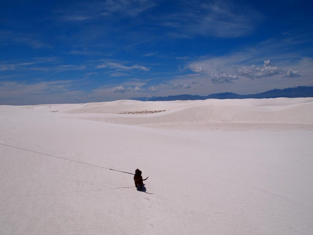 Dog and dunes