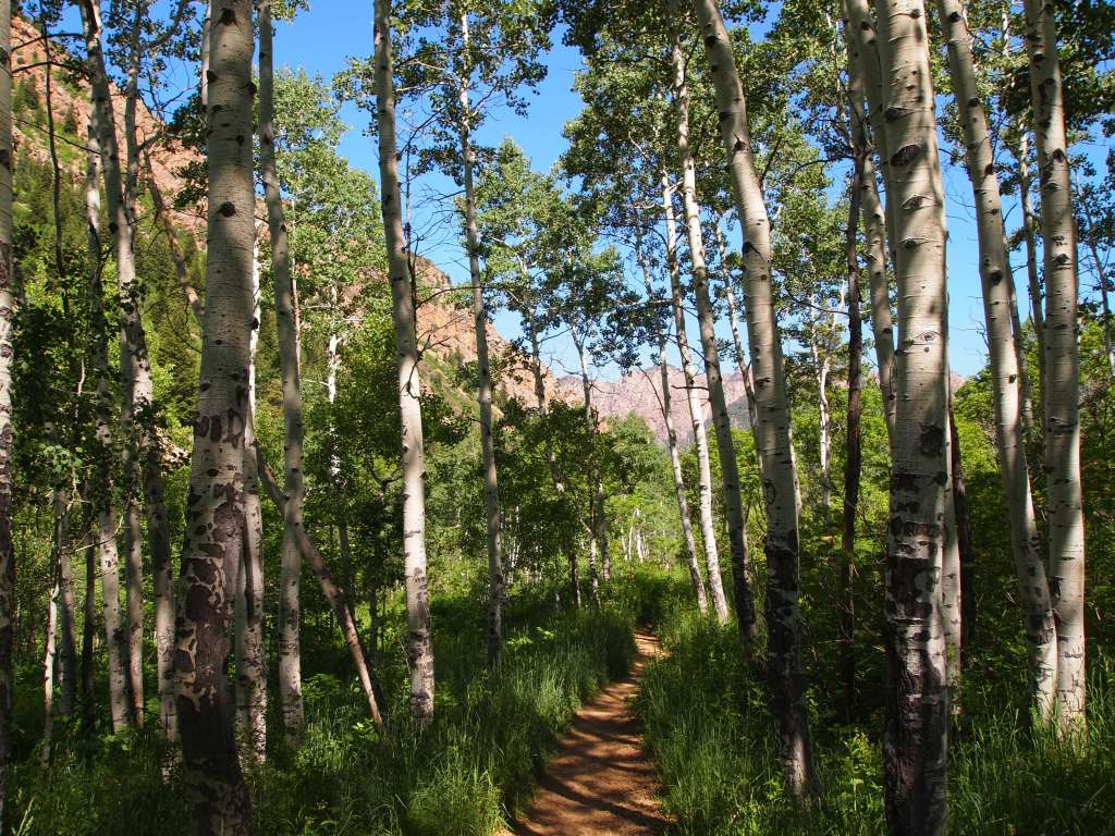 Made it to the aspens!