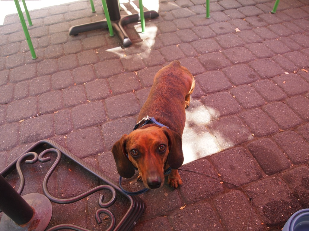 Our faithful companion and persistent beggar