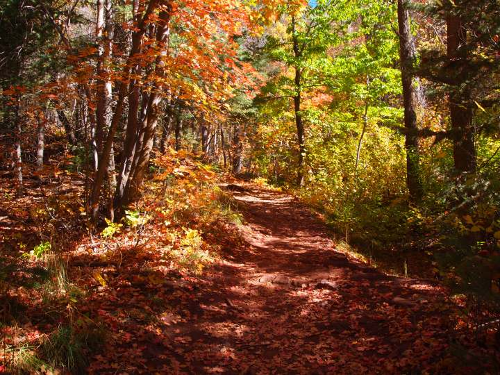 The first part of the trail, though steep at times, was shaded and magnificent