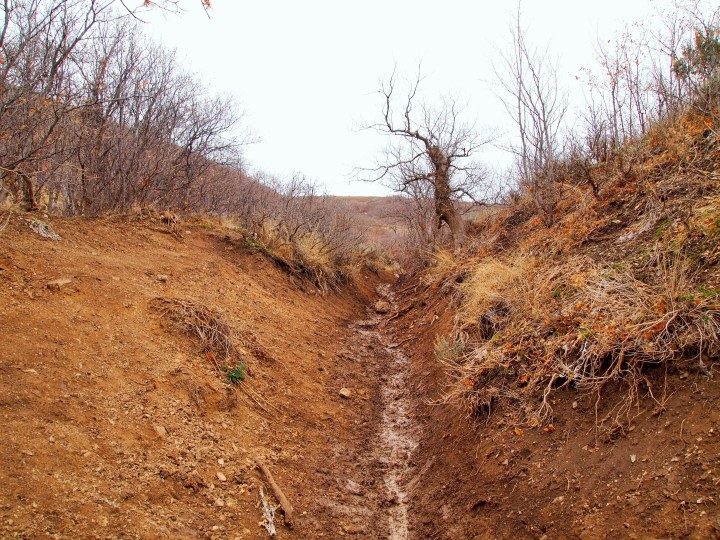 Starting up the ravine trail